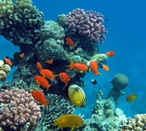 52628_sharm_el_sheikh_snorkeling_nel_mar_rosso_sharm_el_sheikh