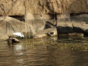 Isola Elefantina Aswan (41)